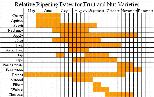 This chart shows the relative ripening dates for different fruit and nut varieties.
